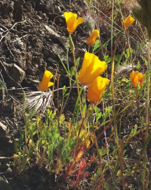 flowers blooming Ray Miller Trail